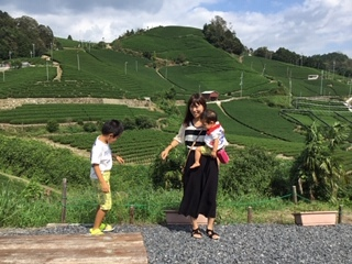 宇治茶の郷 和束の茶畑