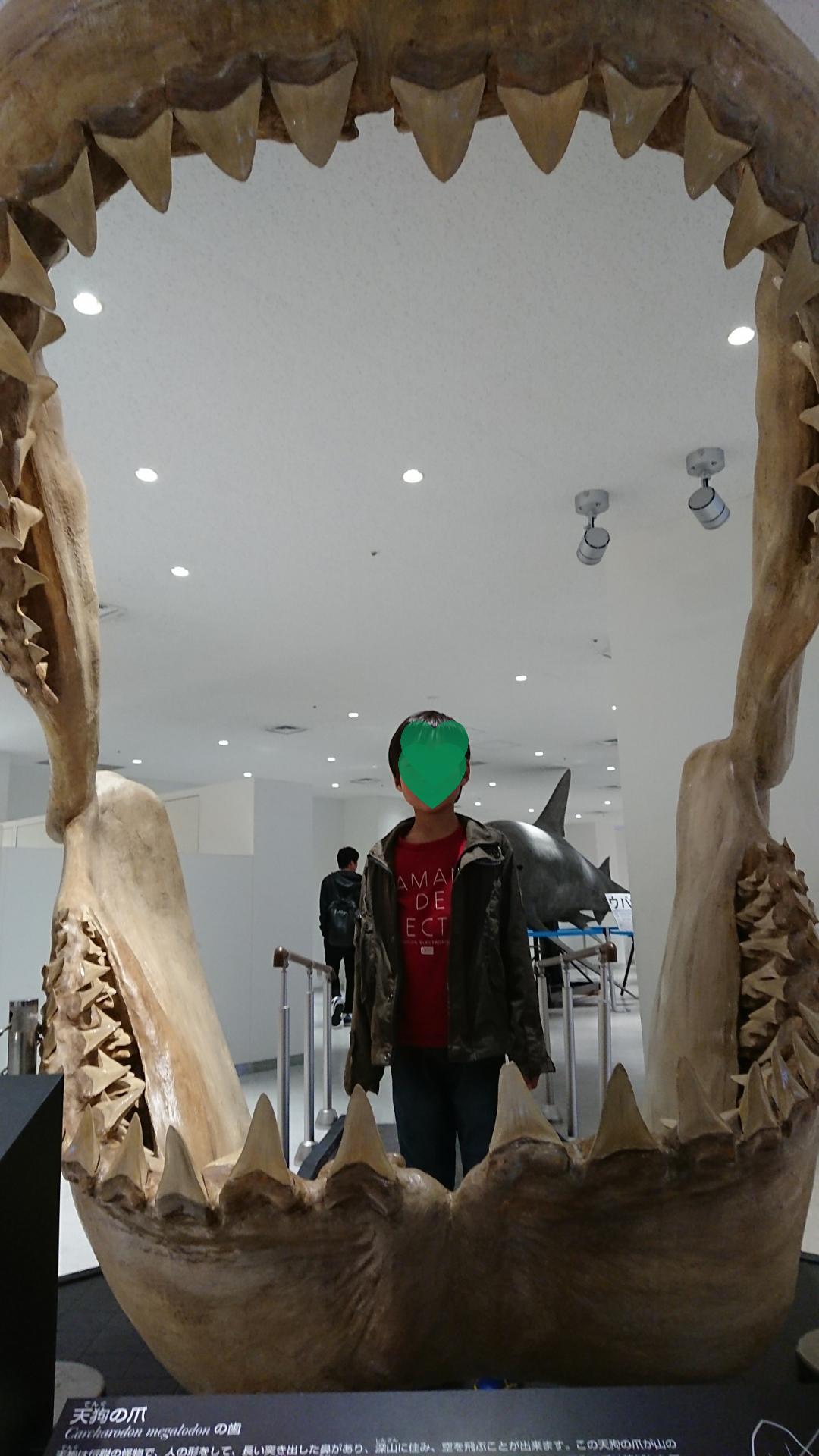 ジンベイザメは圧巻