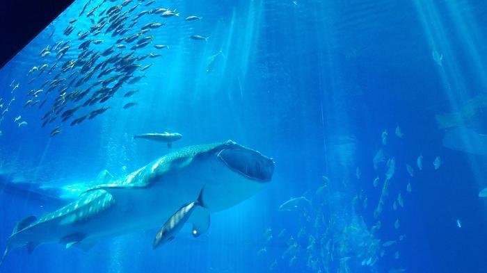 初めての美ら海水族館